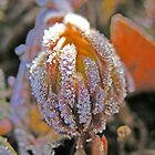 Ice Flower by stacyrod