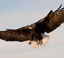 Wind Beneath My Wings by akaurora