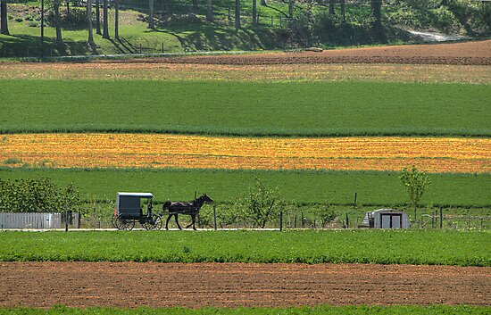 Amish Farmland by Dyle Warren