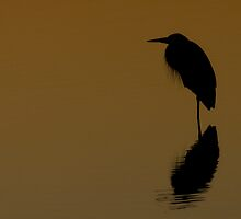 The Still Silhouette by Phillip  Simmons