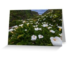Big Sur Garrapata Beach Calla Lilies Greeting Card