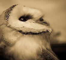 Lyra (Barn Owl) by kt-photography
