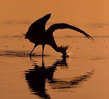 Sunset Splashdown by Phillip  Simmons