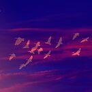 Last Rays by Neophytos