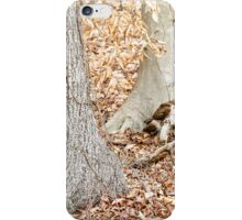 Hawk Looking at Camera iPhone Case/Skin