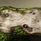 Driftwood by Violette Grosse