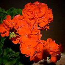 Very Orange Geraniums by David DeWitt