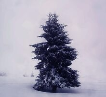 lonely tree by majo