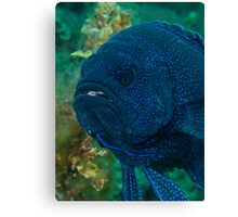 Mr Grumpy Gills Canvas Print