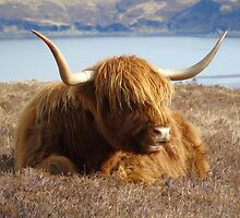 The Highlander  by jmnicolson