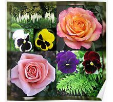 Roses and Pansies Collage Poster