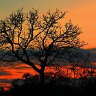 A Typical African Sunset! by jozi1