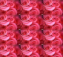 Pink Rose-Series 2 by Tamarra