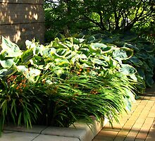 Sunlit Hostas  by Kathryn Jones