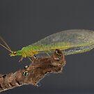 Bug by jameswalter