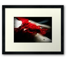 Fleeting flamenco Framed Print