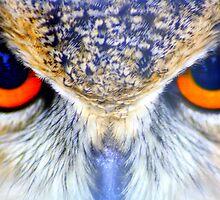 Look into my eyes! by jonAt