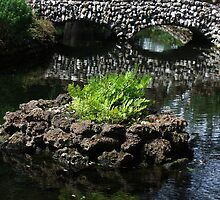 Fern, Water, and Bridge, at West Dean Gardens, Near Chichester, Sussex by jenny meehan