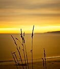 I am grass by Svetlana Sewell