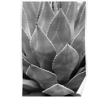 Agave Tucson Airport 2 BW Poster