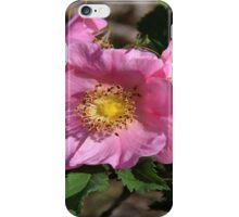Prairie Roses (Rosa acicularis) iPhone Case/Skin