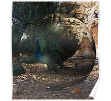 Peacock in a Bubble Poster