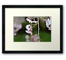 Spring Flowers, no rain showers Framed Print