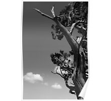 Dying Tree and Clouds 2 BW Poster