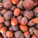 Nuts About Fall Camo  by NatureGreeting Cards ©ccwri