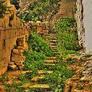 Mdina Garden Steps by Rosalie M
