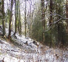 Snowy Sunlit Forest Glade by Dawna Morton