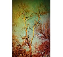 Souls of Trees Photographic Print