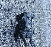 dog by barneygreen12