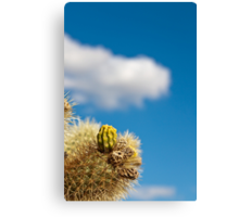 Jumping Cholla Cactus Detail Canvas Print