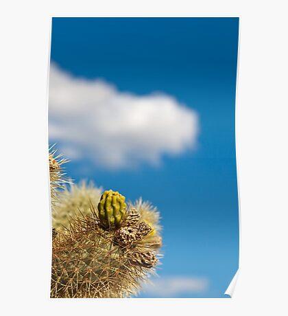 Jumping Cholla Cactus Detail Poster