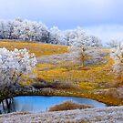 Golden Fields Of Winter, Brannon Mt. NW Arkansas, USA  by NatureGreeting Cards ©ccwri