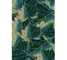 Leaves drawing  Photographic Print
