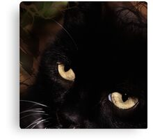Cat with an attitude Canvas Print