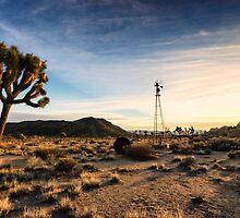 Desert Queen Well by Robert Quinn