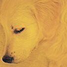 Golden Puppy Asleep by Rebecca Silverman