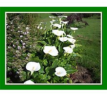 Host of Lilies Photographic Print