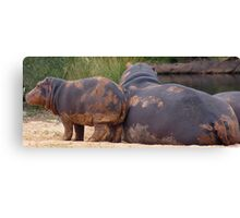 Hippo Baby Canvas Print