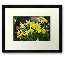 I'm springin' in the rain... Framed Print