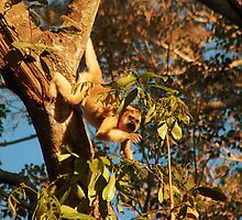 Howler Monkey, The Pantanal, Brazil by Martyn Baker | Martyn Baker Photography