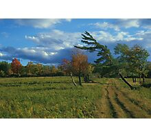 Finger Lakes National Forest Photographic Print