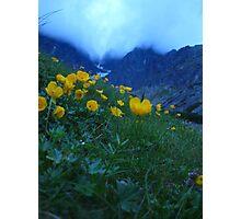 Slovakia mountain flowers II Photographic Print