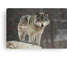 Dominant Wolf Canvas Print