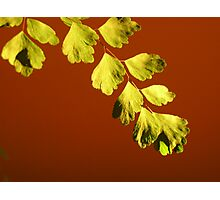 Fire Fern Photographic Print