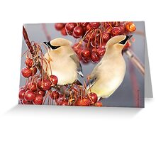 Feathers and Cherries Greeting Card