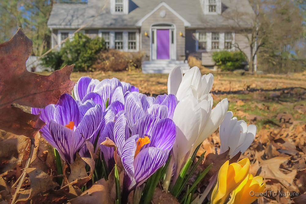 Welcome mat of Spring crocuses by Owed to Nature